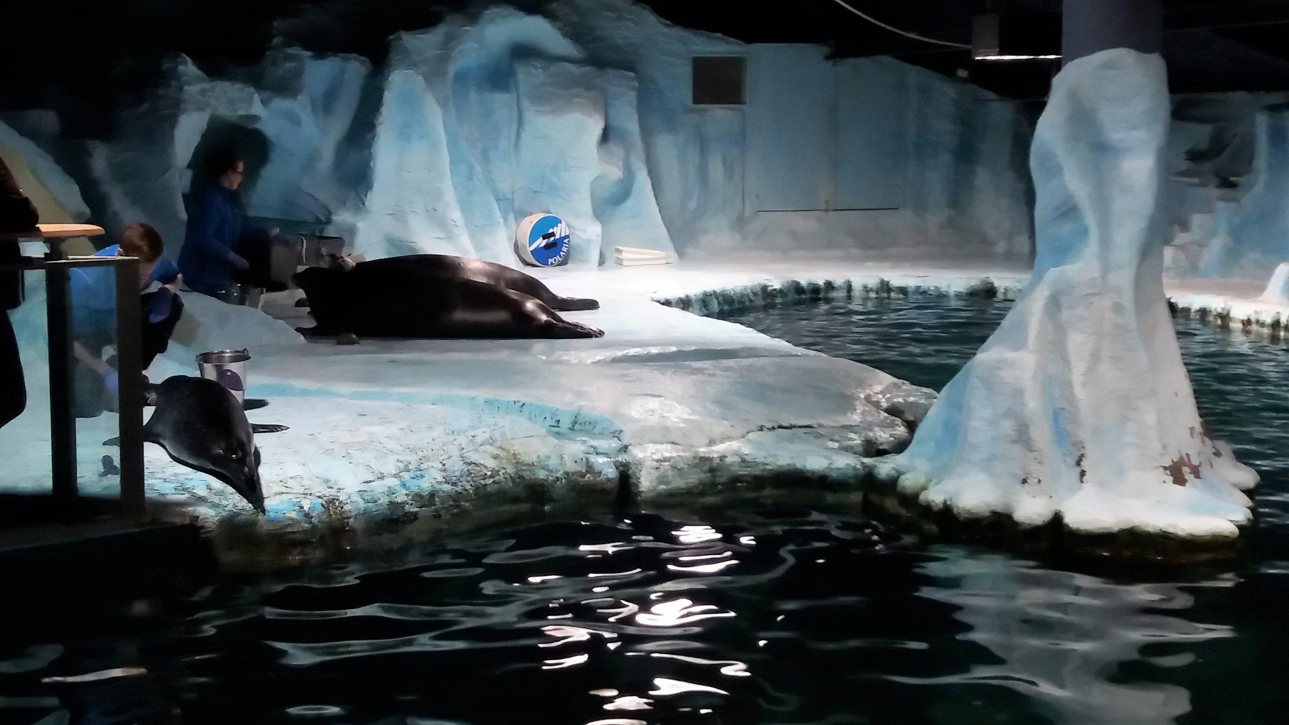 foche, polaria, tromso