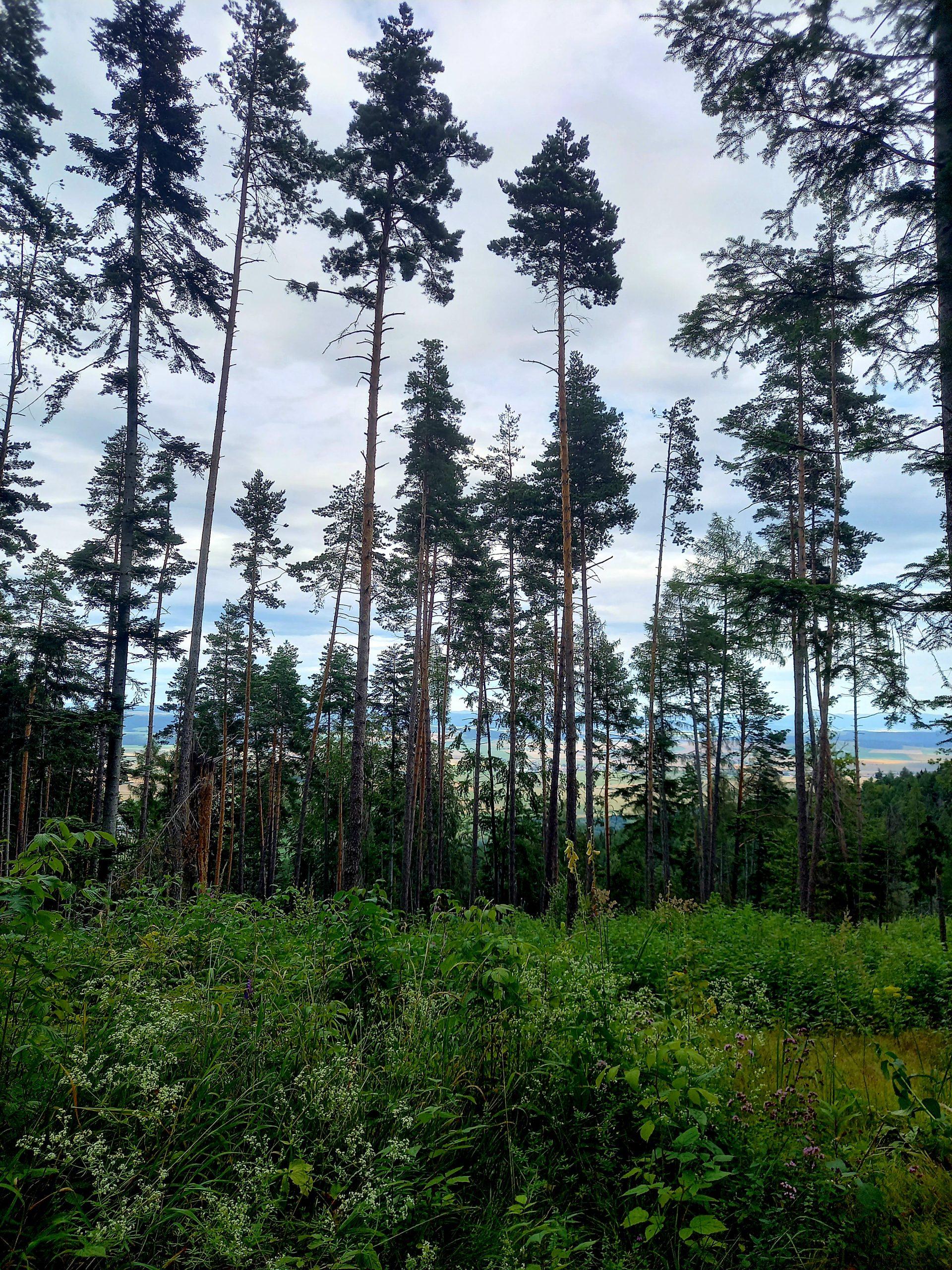 slovenský raj stromy